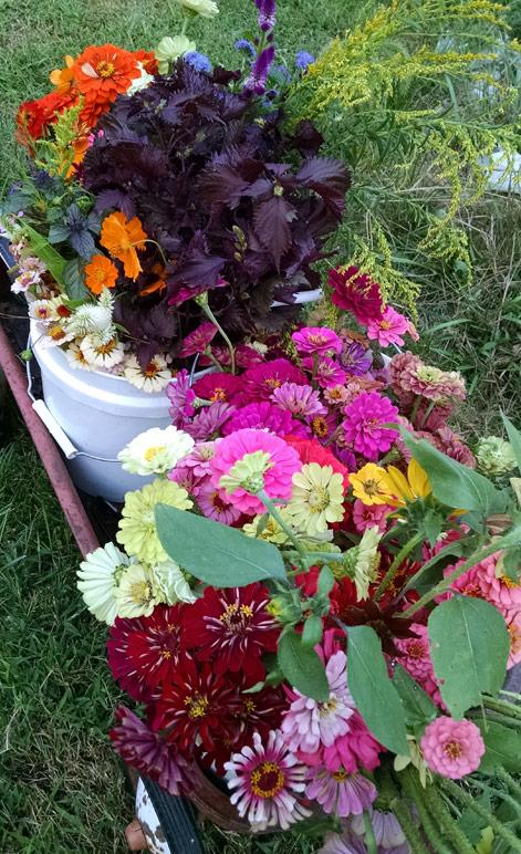 Winston Salem Farmer's Market Flowers