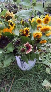 Farmer's Market Flowers