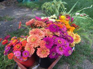 Farmer's Market Flowers example